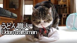 うどん職人なねこ-udon-craftsman-maru