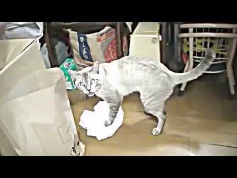 кот болеет и сильно похудел как откормить
