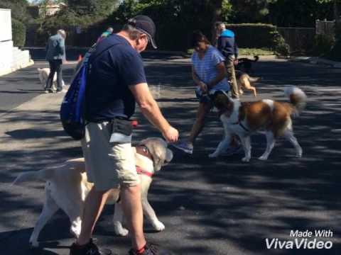 VIP Dog Teams Tilli🐾