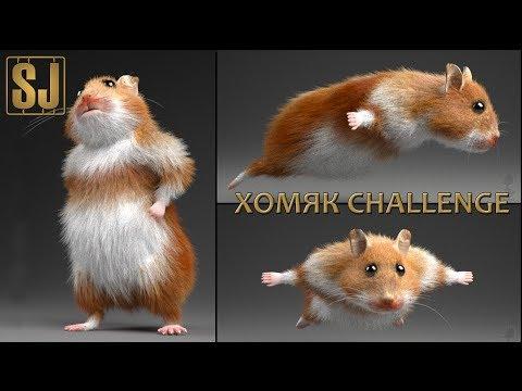 видео: Хомяк challenge (Май 2017 - мои запасы моделей)