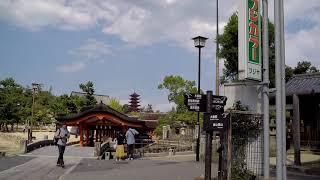 Walking in Miyajima Hiroshima - Island with History - Famous Sightseeing Spot