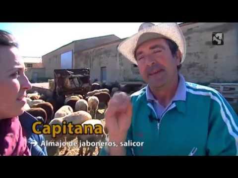María descubre en Romanos un rebaño de ovejas muesas