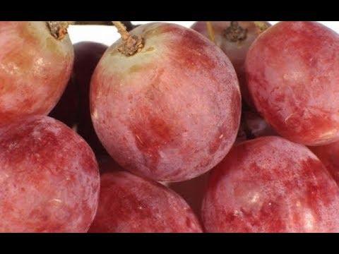 🔴🔴 Часть-7  Самые крупные ягоды винограда. Выставка винограда в г. Пинске,  ⭐2018 г.