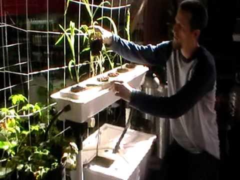 Hydroponic Recirculating Corn - YouTube