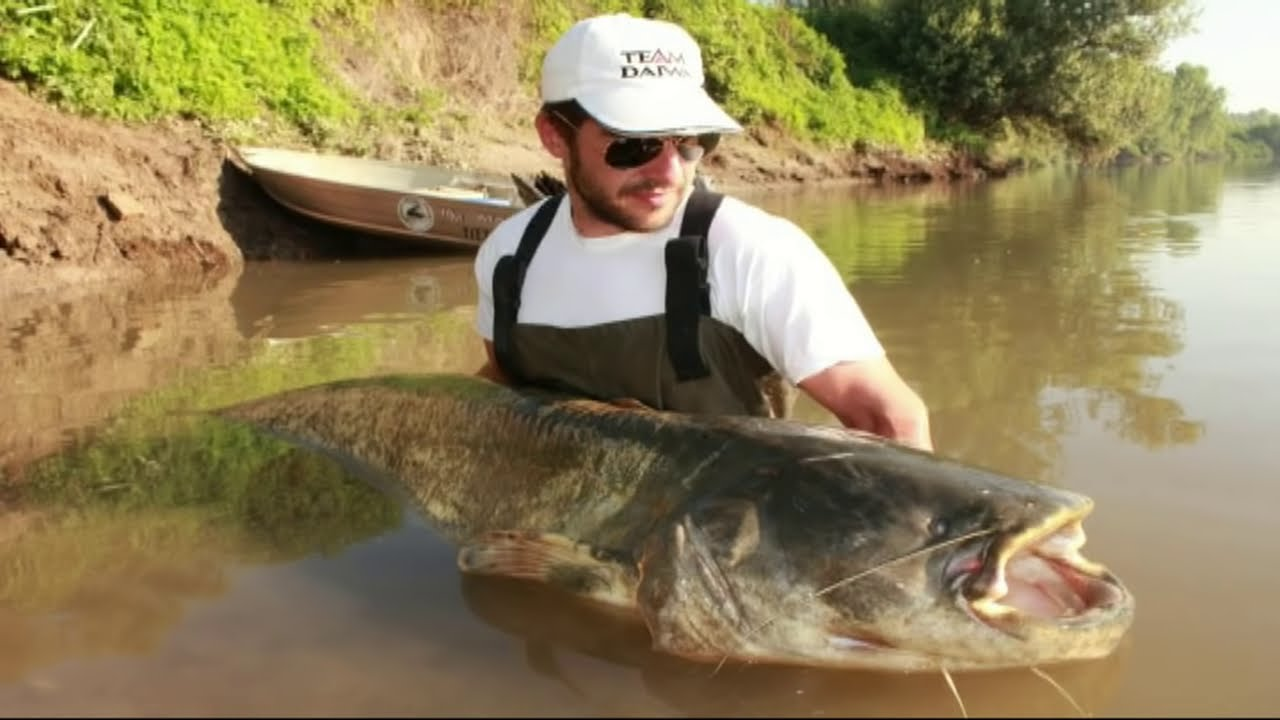 FIGHT BIG WELS CATFISH FROM THE BANK - HD by CATFISHING ... - photo#20