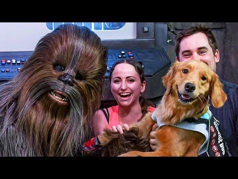 Service Dog Meets Chewbacca