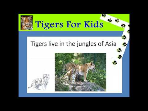 tiger facts for kids | fun facts about tigers - YouTube
