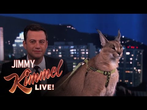 Dave Salmoni Scares Jimmy Kimmel with Wild Animals