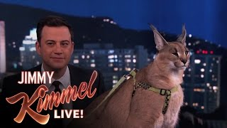 Download Dave Salmoni Scares Jimmy Kimmel with Wild Animals Mp3 and Videos
