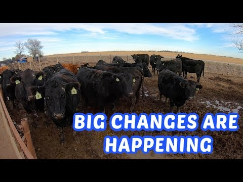 Lets Talk Cattle! What To Do