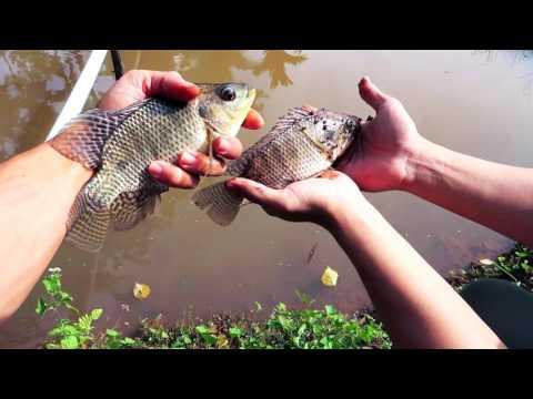 Hai anh em thi câu cá