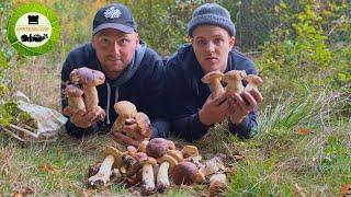 Steinpilze sammeln 🍄 Pilzeskalation 2019 🍄 Tipps & Tricks
