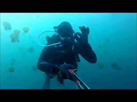 Scuba Diving Monterey CA Jan. 28th 2018