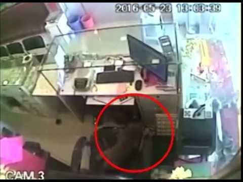 monkey 'thief'