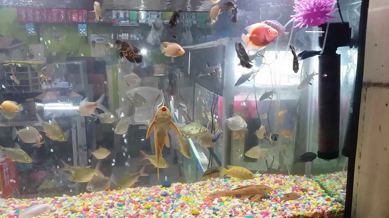 Fish Aquarium Al Noor Aquarium Shop Syed Shafi Jahanuma Hyderabad