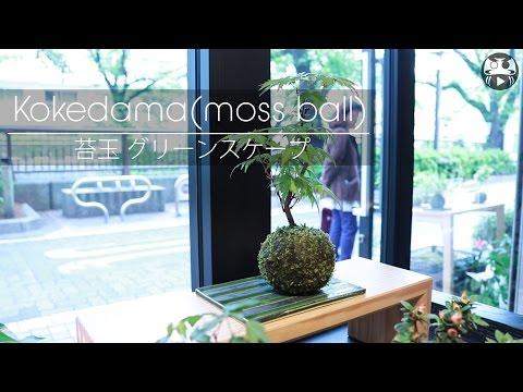 Japanese modern plant ball   JapanMade