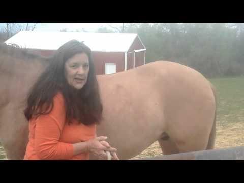 Equine Stifle issue relief in horses .