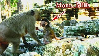 MOM...MILK...Poor baby Jilla was so hungry,Jilla call mom back and fed her