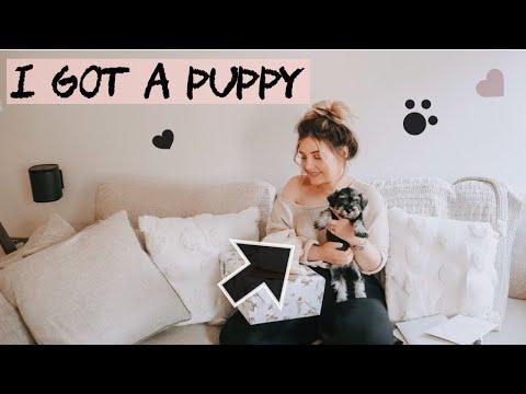 MY BIRTHDAY IN LOCKDOWN - I GOT A MINIATURE SCHNAUZER PUPPY