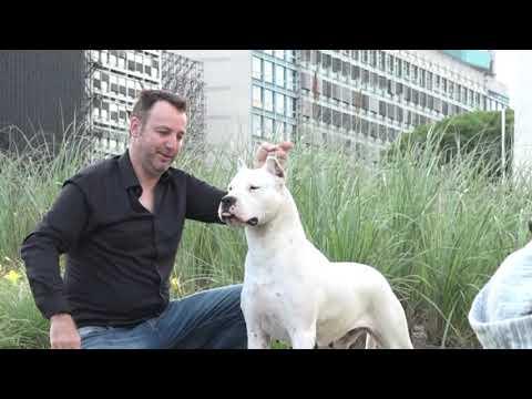 """""""perros-en-acción""""-calendario-2020-–-huellas-urbanas-desde-el-obelisco-enero"""