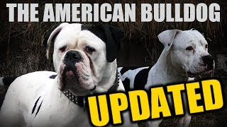 UPDATED  AMERICAN BULLDOG  JOHNSON  SCOTT  PAINTER  BLACK HYBRID