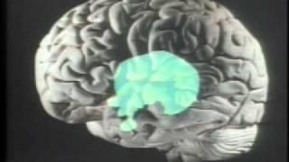 The Brain of an Autistic child + Temple Grandin