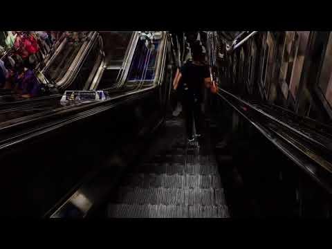 Escalator Cate Field