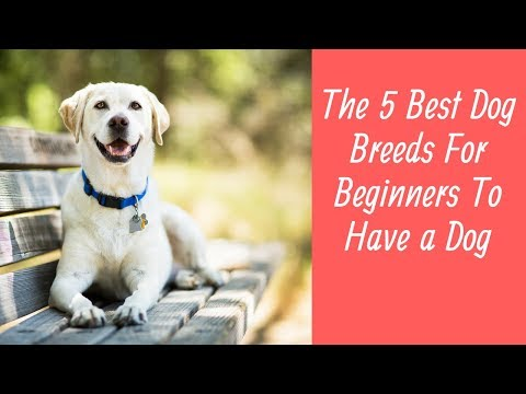 The 5 Best Dog Breeds For Beginners To Have a Dog