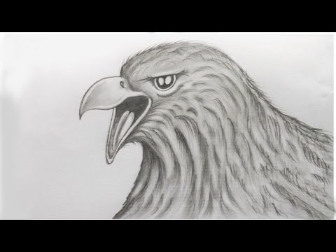 How To Sketch An Eagle