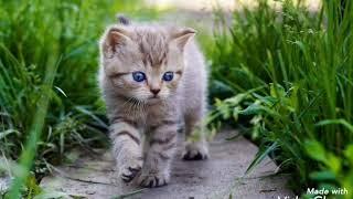 Милые котята, обои❤️❤️❤️