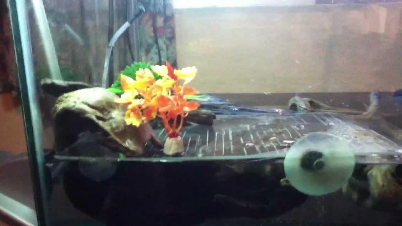 Acuario ojeras rojas tortuga lagarto youtube for Acuario tortugas