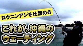 沖縄のウェーディング!ロウニンアジを仕留める!