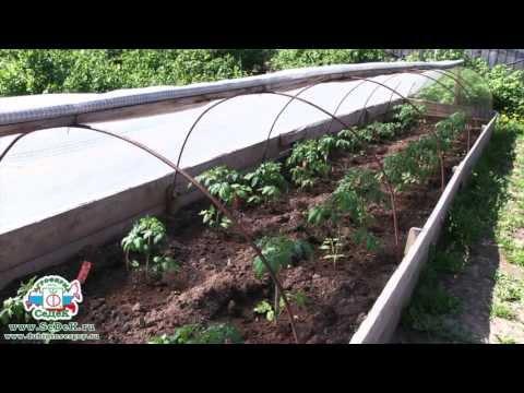 видео: Идеальный огород