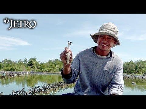 【JETRO】IoTでエビを救え! ‐タイで挑む養殖ビジネス‐
