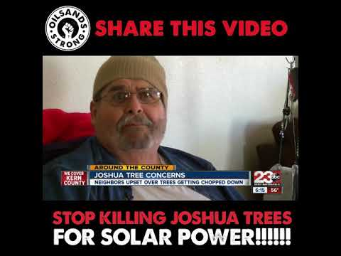 Stop the deforestation of Joshua Trees!