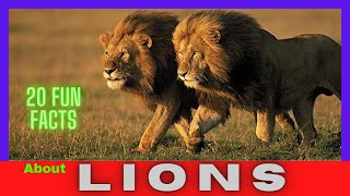 20 Fun Facts About Lions || Awesome Facts About Lions ||