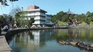奈良・猿沢池のカメと興福寺の五重塔 Sarusawa Pond and Kofukuji Temple Nara Japan