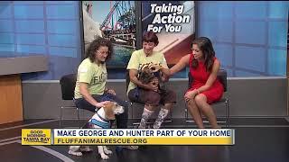 Rescues in Action Jan. 19 | George, Hunter seek homes
