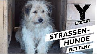 Hunde retten – Unterwegs mit Tierschützern