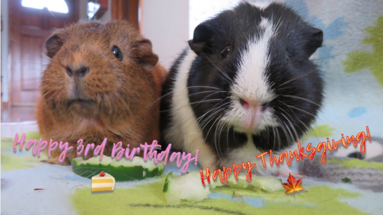 Brownie & Oreo's 3rd Birthday & Thanksgiving