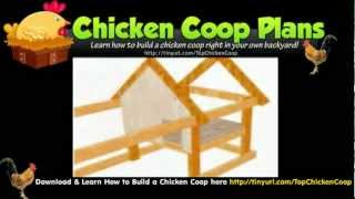 How Build Chicken Coop - Cheap Chicken Houses