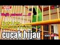Perhatikan Dan Wajib Pahami Cucak Ijo Antara Mandi Sedang Birahi Dan Mandi Sedang Topform  Mp3 - Mp4 Download
