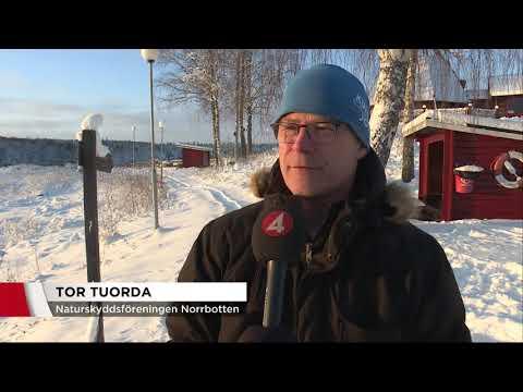 Boliden vill öppna nygammal gruva - Nyheterna (TV4)