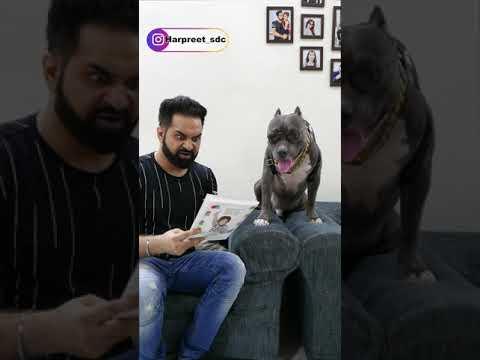 Brody Ubalti Jawani Padta hai | Funny Dog Video | Harpreet SDC #shorts