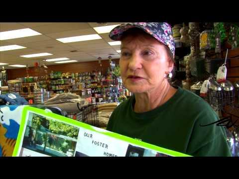 Cat lovers, must see - Hellena Okanagan Humane Society - YouTube - 동영상