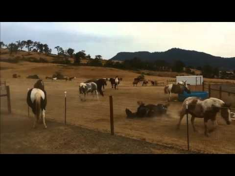 Horses Rolling in the Fun at Duchess Sanctuary