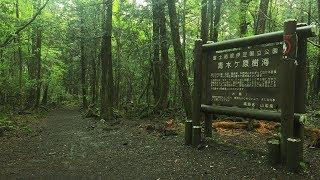 ESPLORIAMO LA FORESTA DEI SUICIDI ✈ FORESTA DI AOKIGAHARA