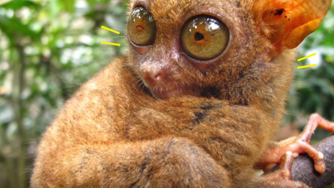 5-animals-that-came-back-from-extinction