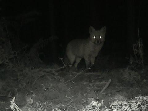 St Albans Wildlife - Raspberry Pi Night Vision Camera.
