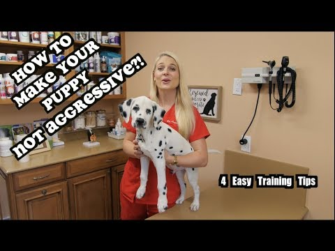 What To Do If Your Puppy Is Agressive | Aggressive Puppies